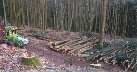 Exploitation du bois de châtaignier, ressource renouvelable et durable